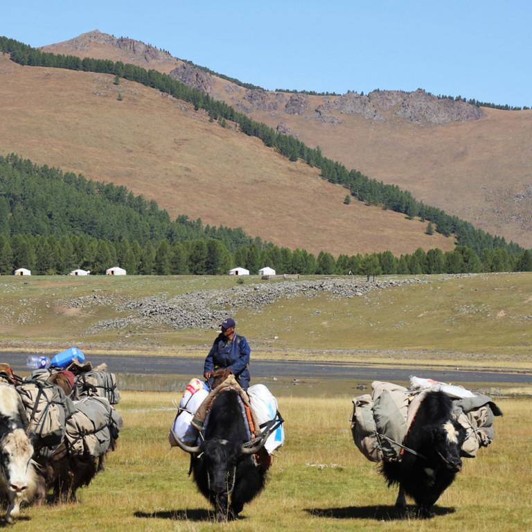Heavily loaded yaks, Nomadic life, Mongolia
