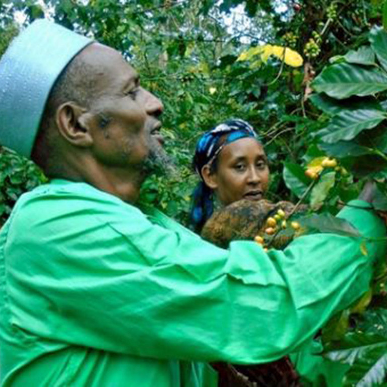 Tahir, Coffee Farmer on Farm Africa Project, Ethiopia