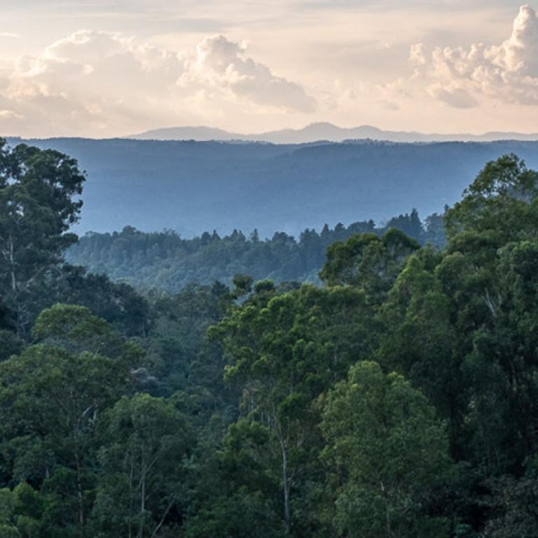 Coffee Forest near Bonga, Ethiopia