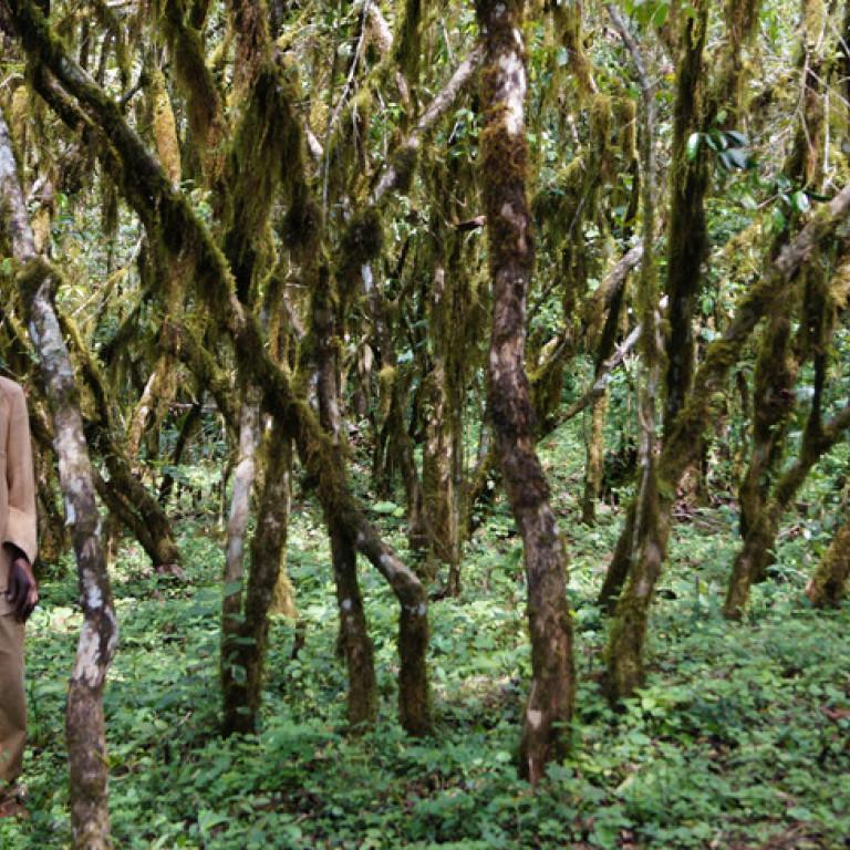 Wild Coffee Plants in Kafa Biosphere Reserve, Ethiopia