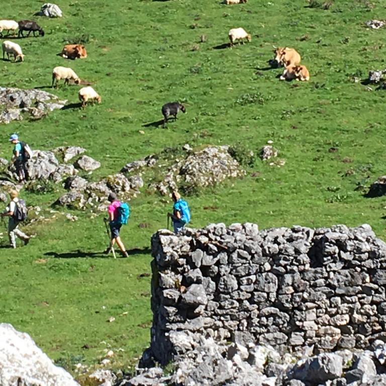 Walking across Majadas (mountain pastures) in the Picos de Europa